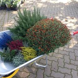 Der holl nder pflanzencenter 22 foto vivai for Pflanzencenter berlin