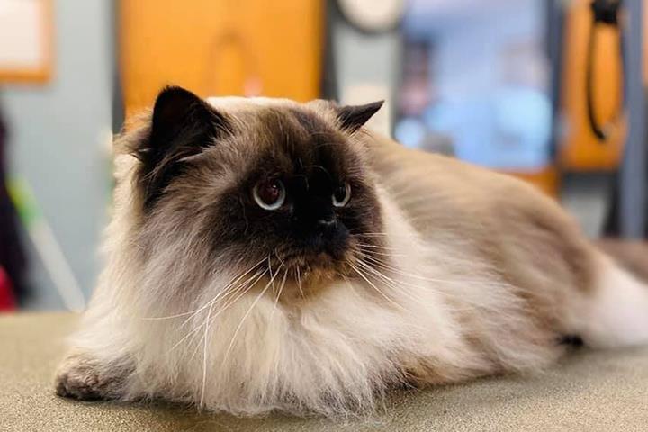 Pampered Pets Salon & Spa: 2367 Cumberland Square Dr, Bettendorf, IA