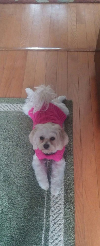 Grooming At Tiffany's: 127 Rockingham Rd, Derry, NH