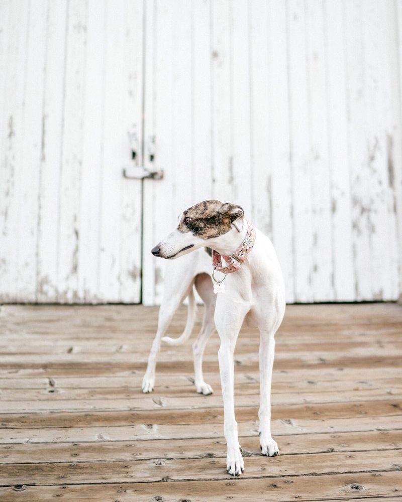 Operation Greyhound: 273 Chicory Ln, El Cajon, CA