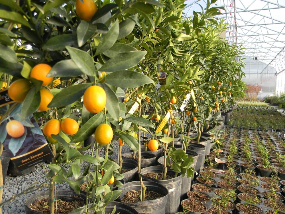 Photo Of Going Green Plant Nursery Screven Ga United States Georgia Citrus