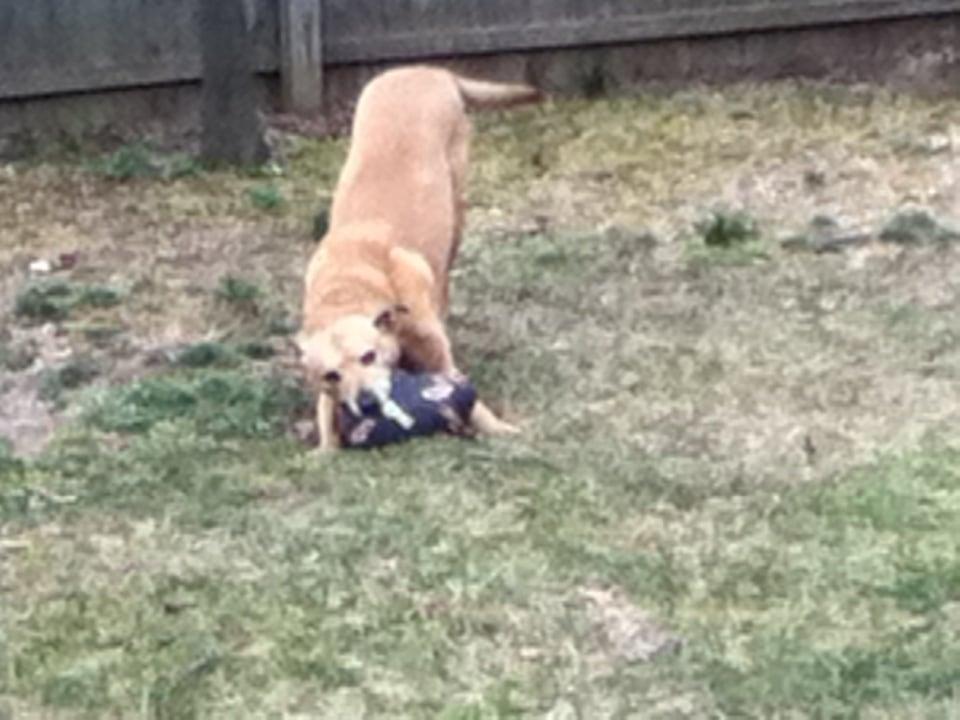 Dog Day Care In Farmingdale