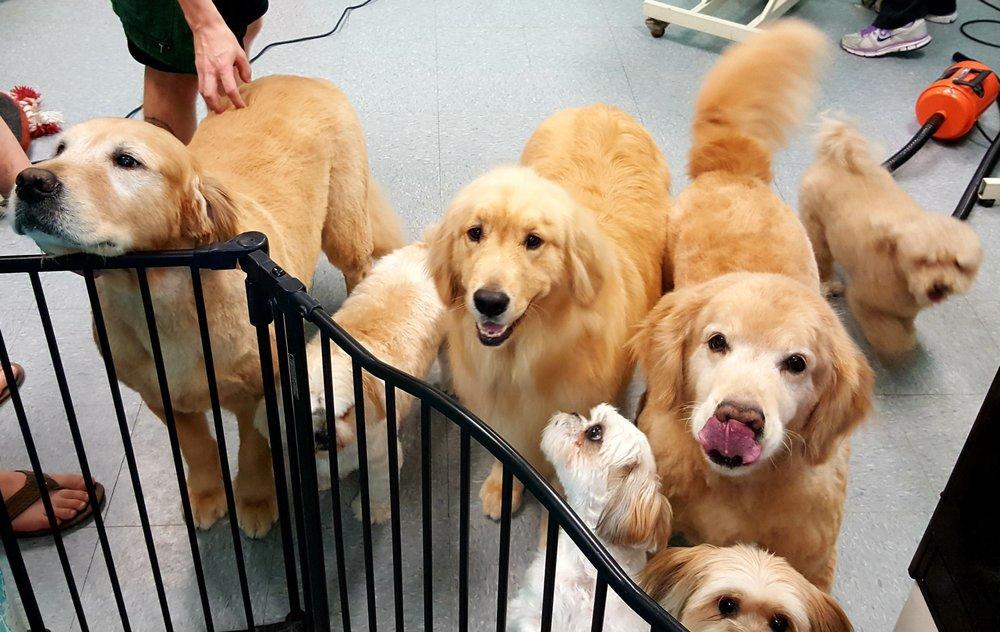 Spaw Pet Salon