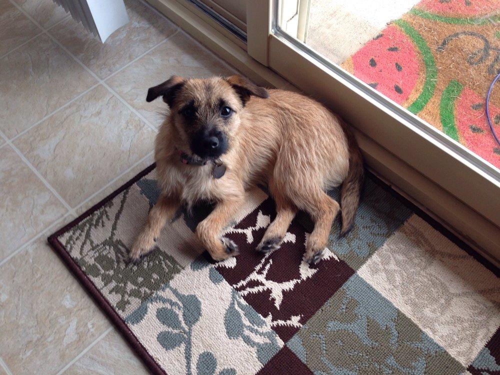4 Puppy Paws: 99 Blashack St, Waldorf, MN