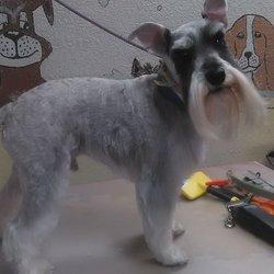 Sheldon road groomers 43 photos 35 reviews pet groomers 8400 photo of sheldon road groomers elk grove ca united states solutioingenieria Choice Image