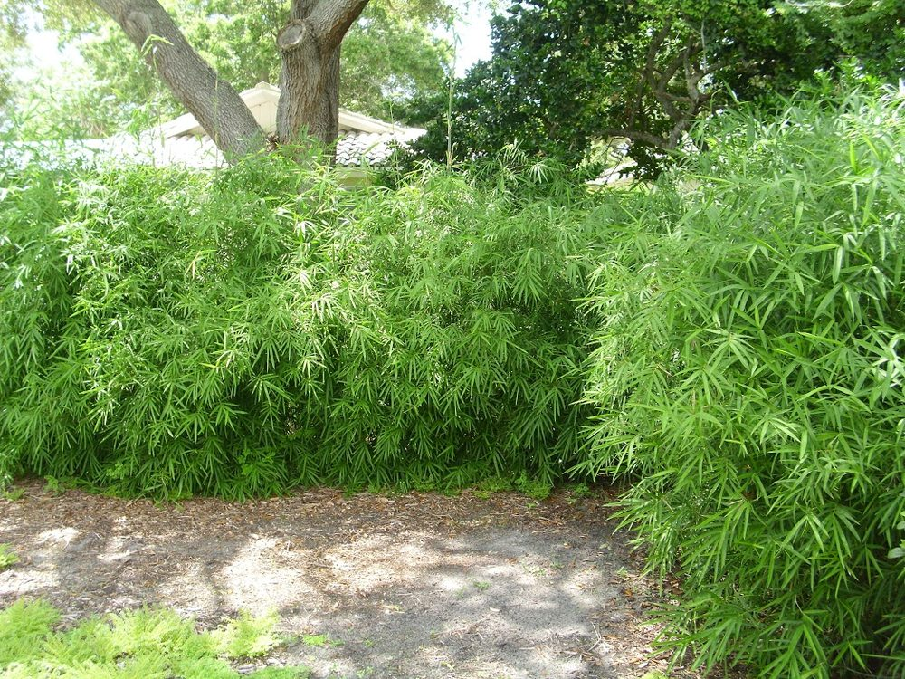 Fantastic bamboo garden pictures inspiration landscaping for Bamboo garden