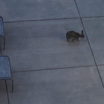 Photo Of Hilton Garden Inn   Billings, MT, United States. Bunny!