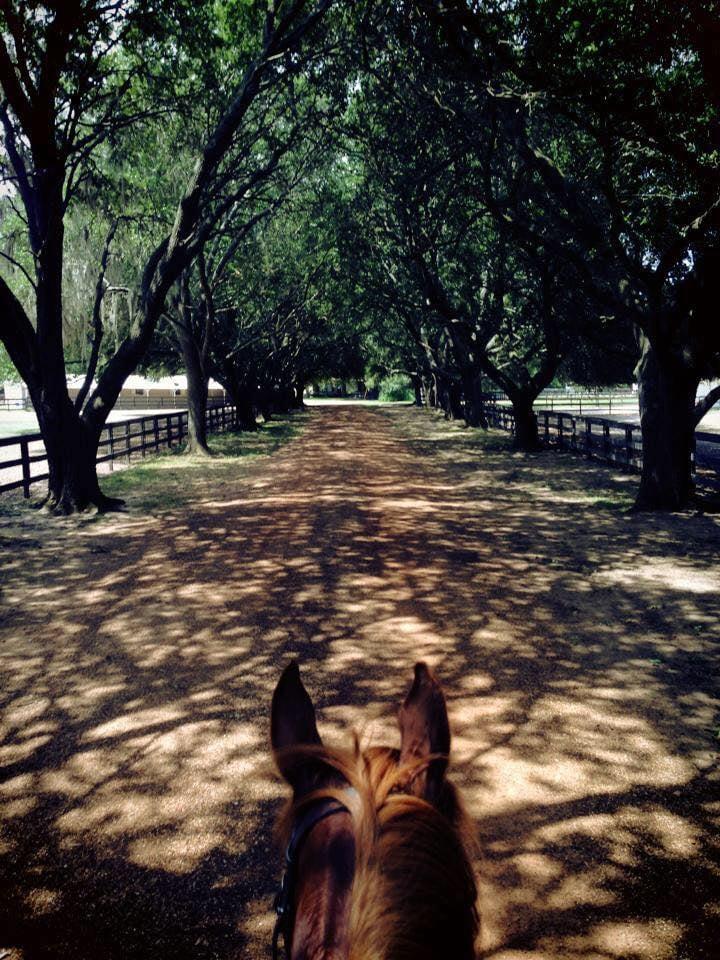 Grand Oaks Farm: 13403 Huffmeister Rd, Cypress, TX