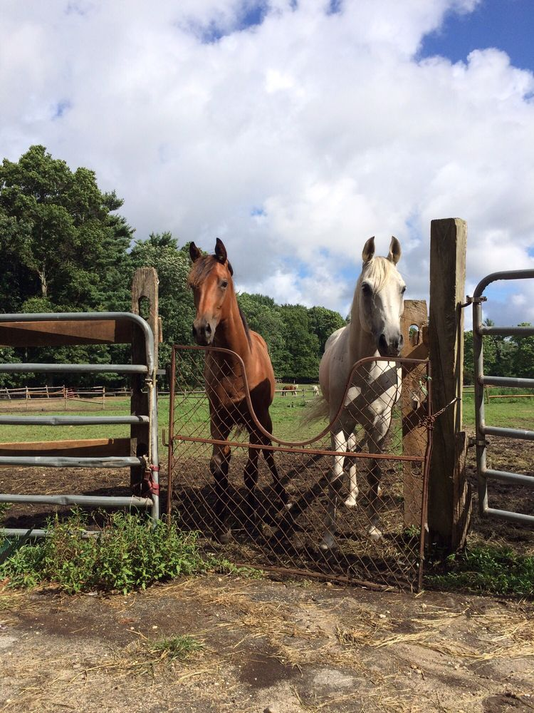 Big River Barn Rescue: Muttontown Rd, Muttontown, NY