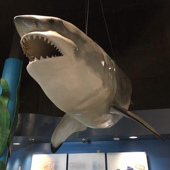 Newport Aquarium Photos Reviews Aquariums - 10 awesome aquariums where you can spend the night with sharks