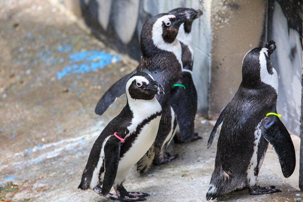 Photo of Binghamton Zoo at Ross Park: Binghamton, NY
