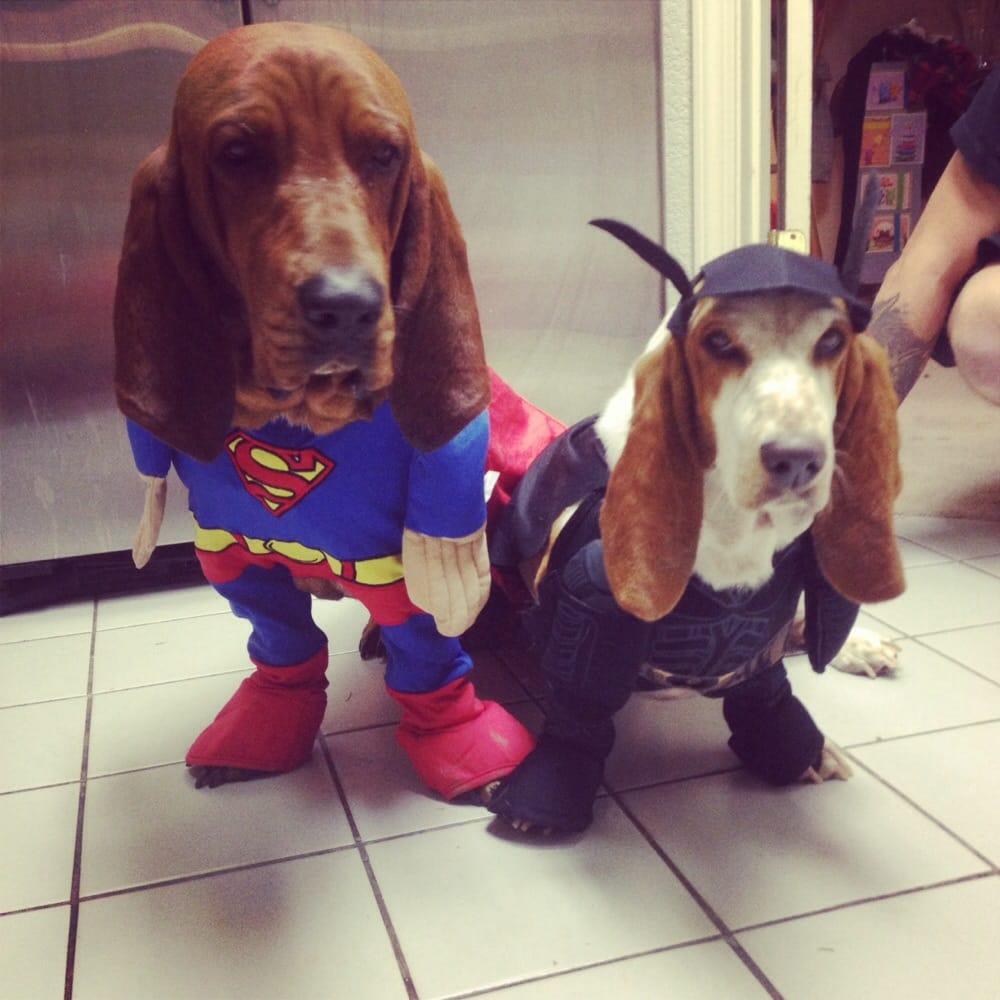 Dog Rescue Auburn Ca