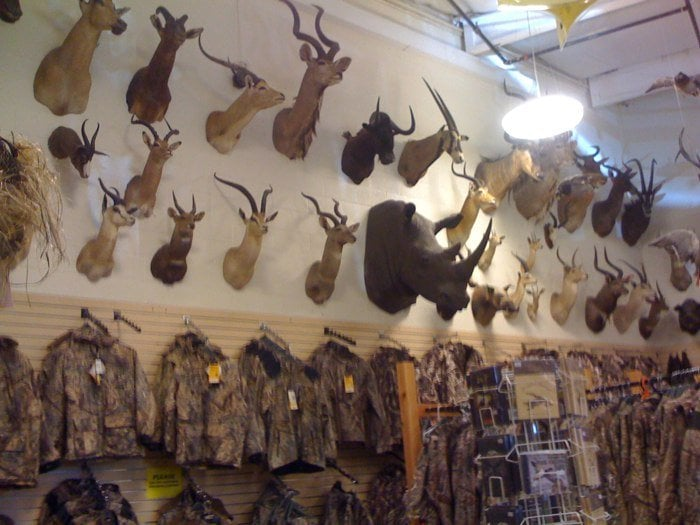 Great taxidermy collection yelp for Guns fishing other stuff