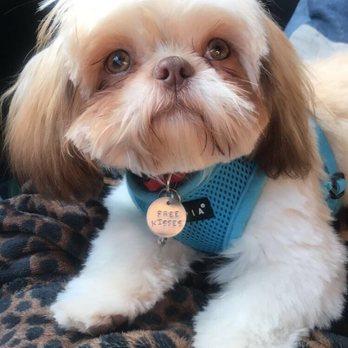 Linda s pet grooming closed pet groomers 6505 for Cool dog spa san antonio