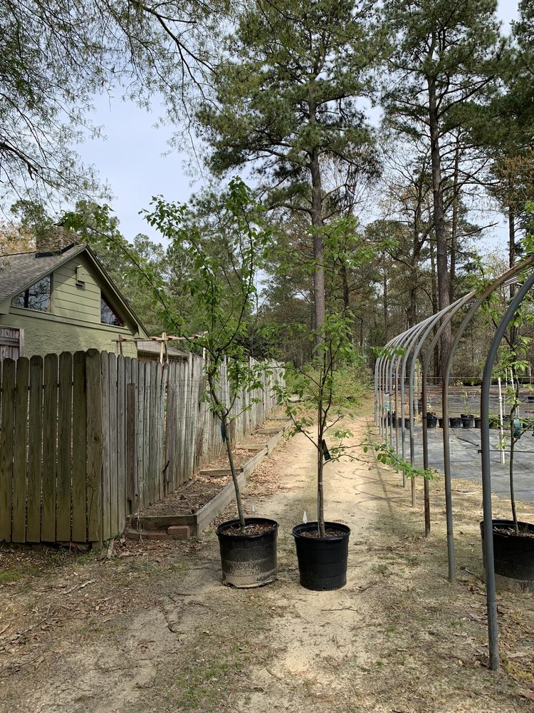 Rabbit Ridge Nursery: 125 W Lisa St, Coats, NC