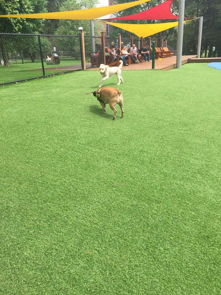 Beau S Dream Dog Park