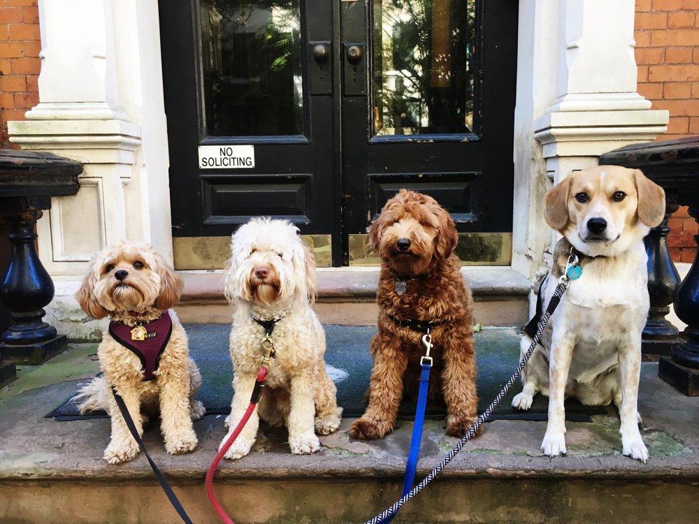 Brooklyn Tails & Trails Dog Walkers: 306 Gold St, Brooklyn, NY