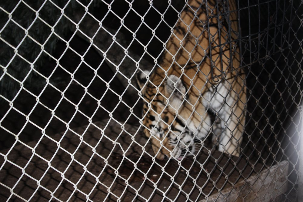 Catty Shack Ranch Wildlife Sanctuary: 1860 Starratt Rd, Jacksonville, FL