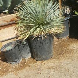 Photo Of Macias Nursery Thousand Palms Ca United States