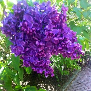 6fd7f2ebd20e Hulda Klager Lilac Gardens - 98 Photos   19 Reviews - Landmarks ...