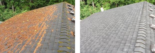Jake's Gutter & Roof Cleaning: 4520 Grand Ave, Everett, WA