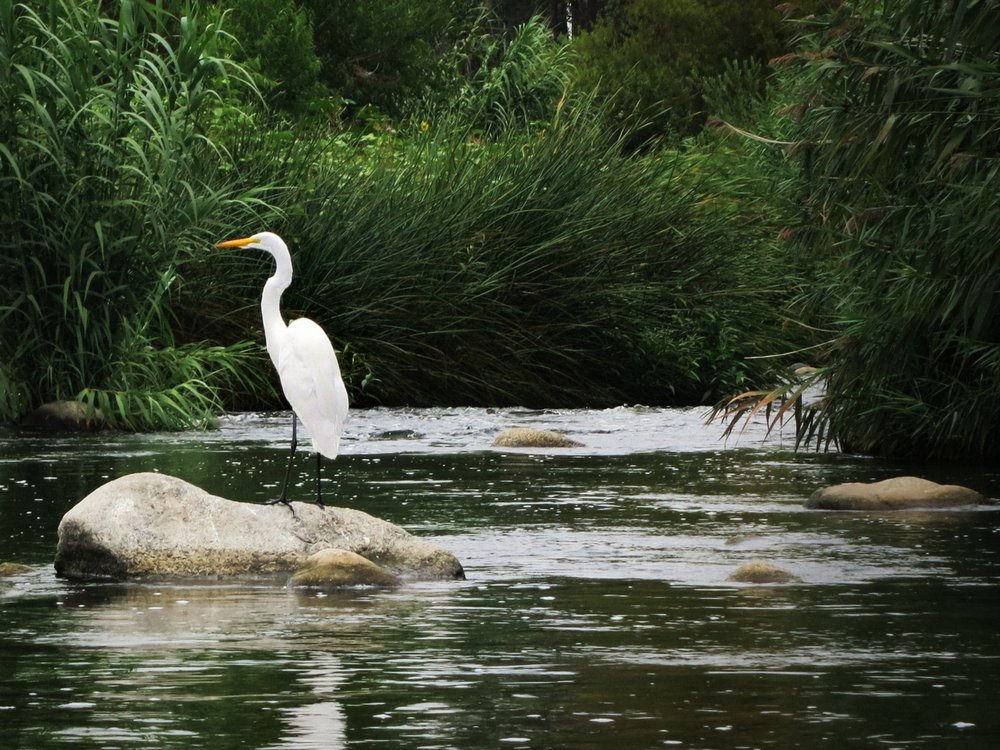 LA River Kayak Safari: 2825 Benedict St, Los Angeles, CA