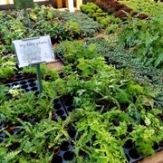 Tools And Seeds Photo Of Wilson Nurseries Frankfort Ky United States Itty Bitty Plants