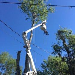Photo Of Jon Davis Tree Service Brooksville Fl United States