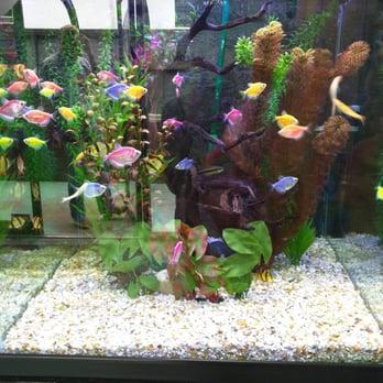 Aquatek tropical fish 30 photos 78 reviews local for Fish store austin