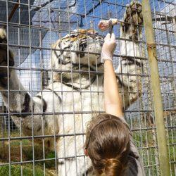 National Tiger Sanctuary - (New) 70 Photos & 38 Reviews - Active