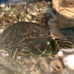 Petsmart 130 Photos 208 Reviews Pet Training 3855 59