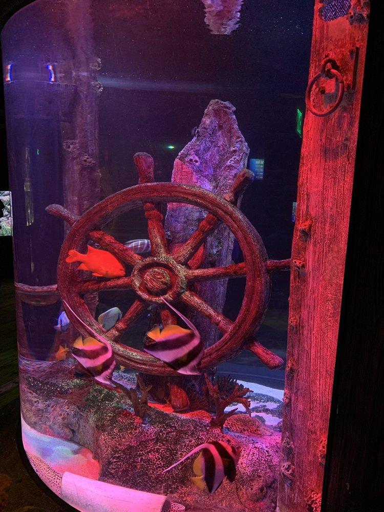 SEA LIFE Kansas City Aquarium: 2475 Grand Blvd, Kansas City, MO