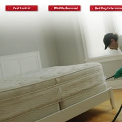 Amazing Photo Of Bed Bug Exterminator Pro   Toronto, ON, Canada. Certified And  Experienced