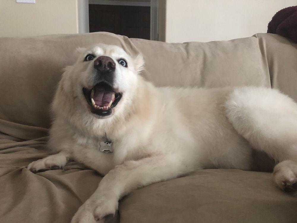 Bonnie's Pet Grooming: 2201 Paris Rd, Chalmette, LA