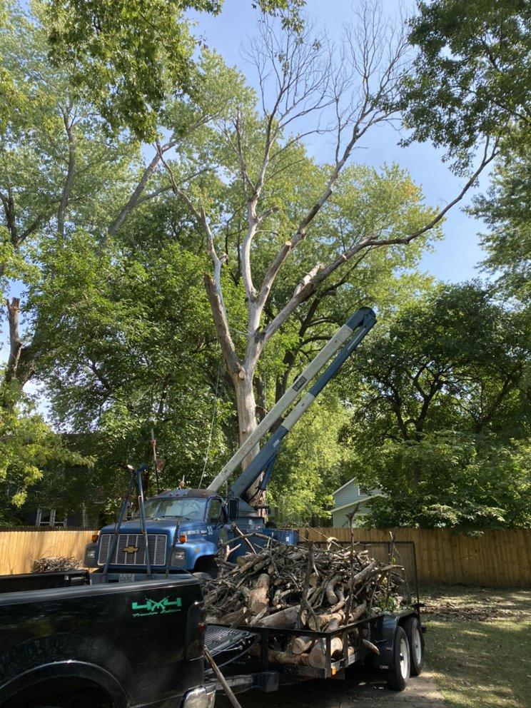 The Tree Things: Berrien Springs, MI