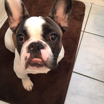 French bulldog puppies los angeles