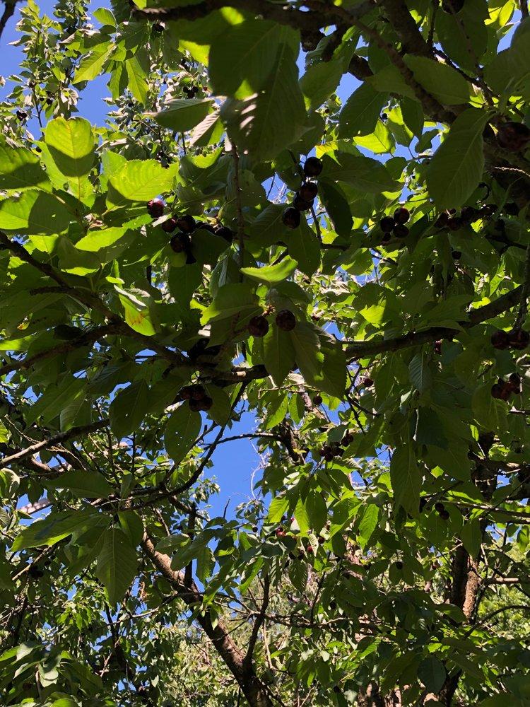 Levering Orchard: 2294 Orchard Gap Rd, Ararat, VA