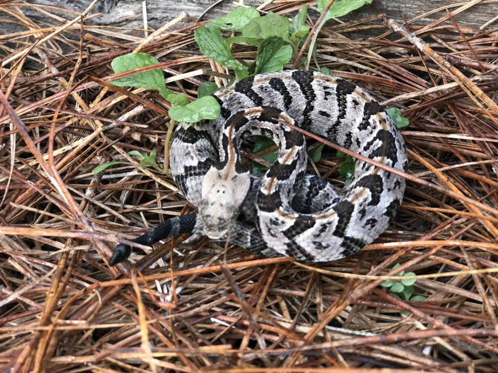 Alabama Wildlife Pro: 15 Eddings Ln, Alabaster, AL