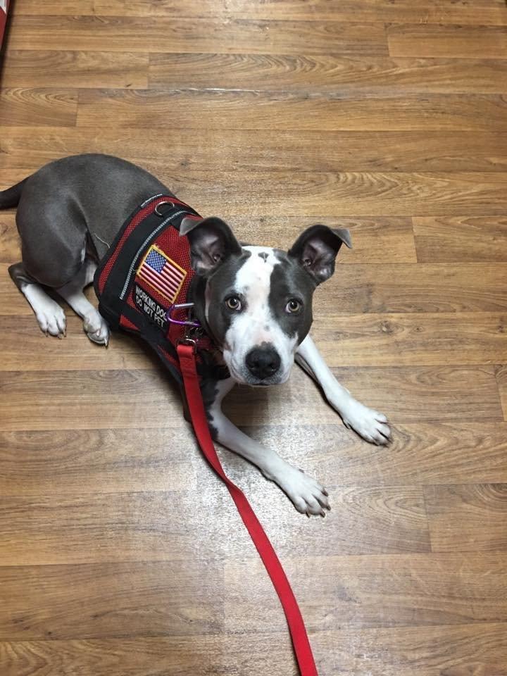 Dog Training Lithia Fl