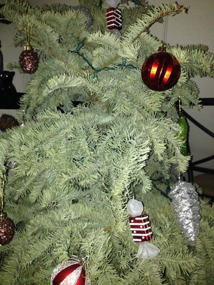 Tree Land Christmas Trees 17 Reviews 1720 S