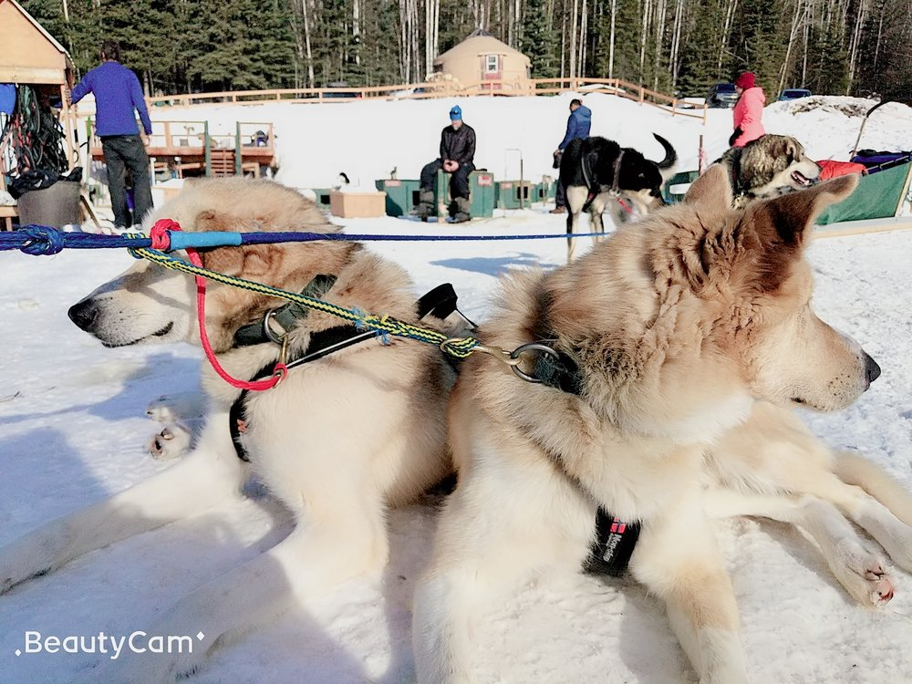 Social Spots from Paws For Adventure