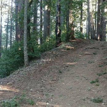 11c1b67316c Big Basin Redwoods State Park - 1996 Photos   609 Reviews - Parks ...