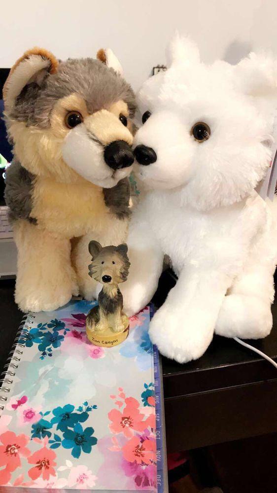 Wild Spirit Wolf Sanctuary: 378 Candy Kitchen Rd, Ramah, NM