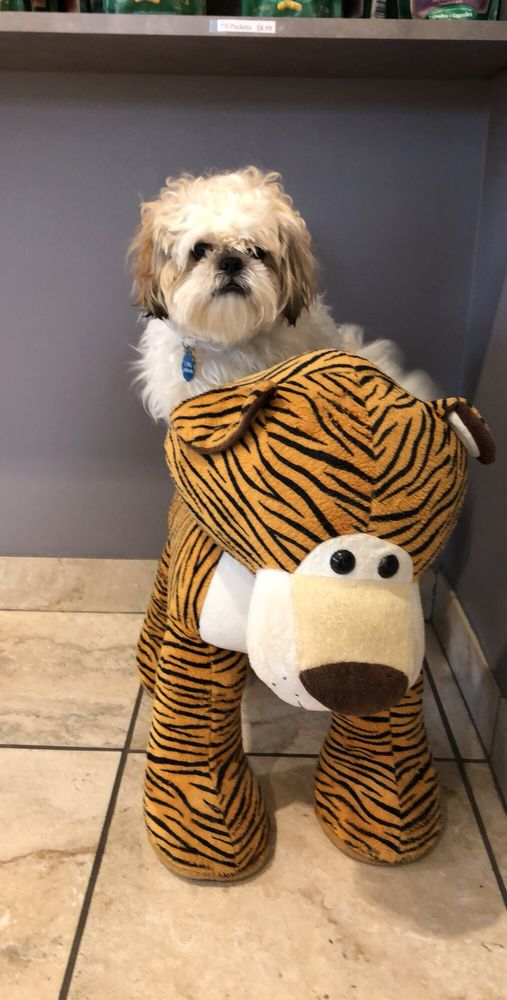Tiger Tails Animal Hospital: 2605 Peachtree Industrial Blvd, Duluth, GA
