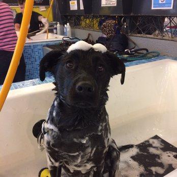Self Wash Dog Service San Diego Ca