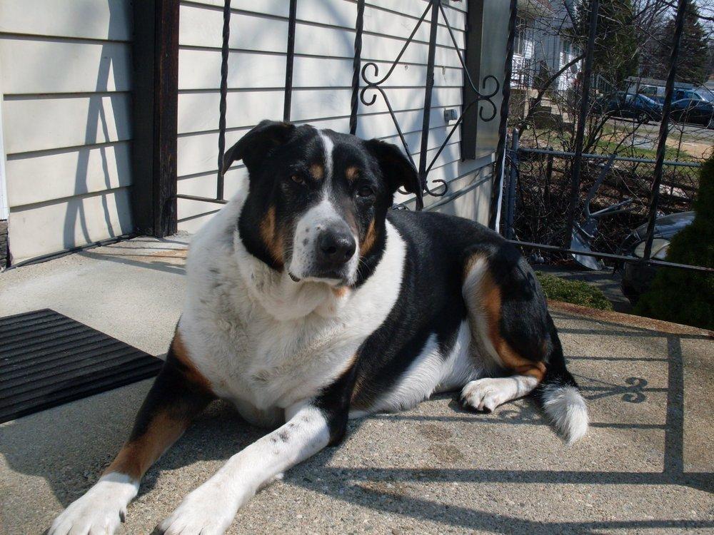 Must Love Dogs: Framingham, MA