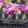 Maku'u Farmer's Market: 15-2131 Keaau-Pahoa Hwy, Pahoa, HI
