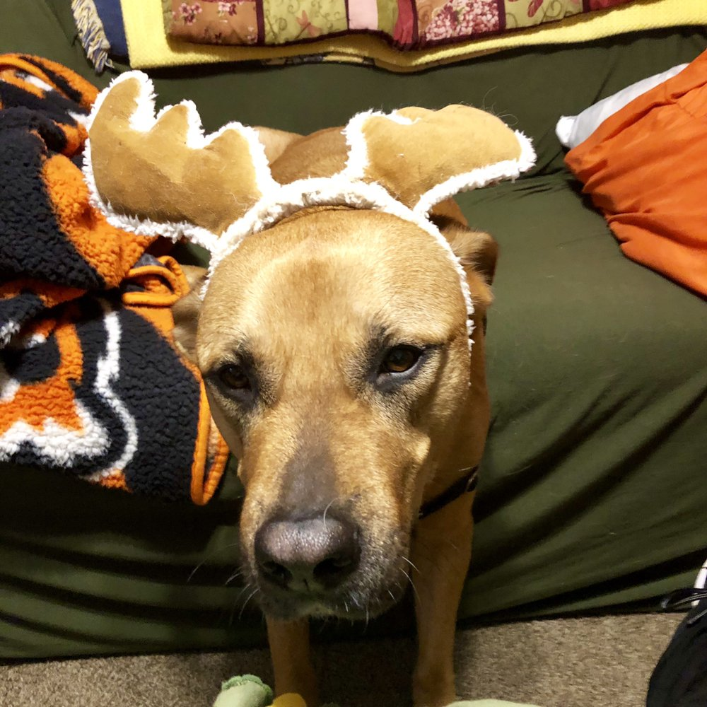 Daisy Mae's Pet Service: Dayton, OH