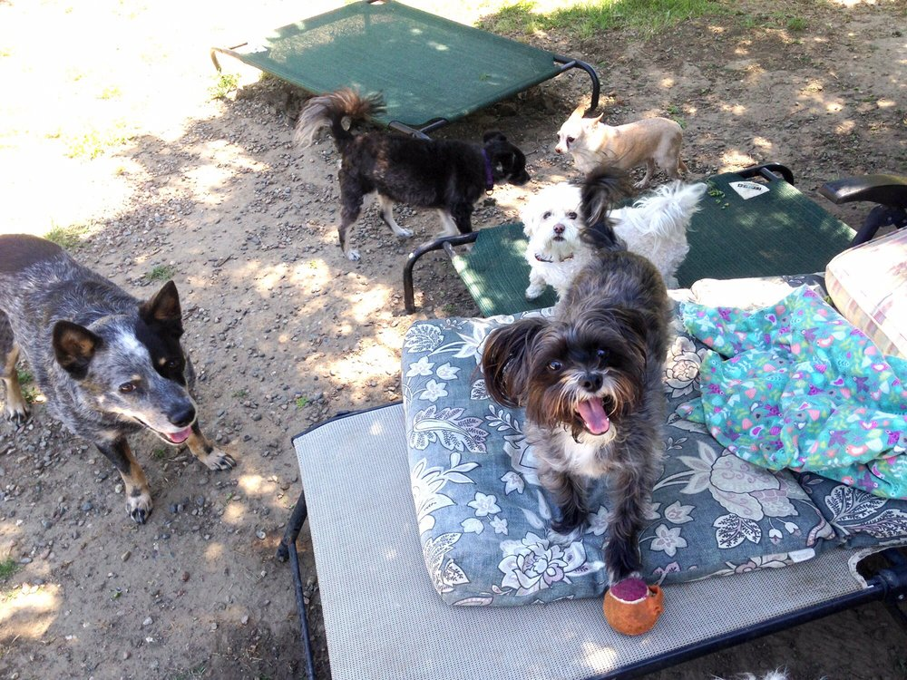 Moon Dogs Pet Sitting & Urban Farm
