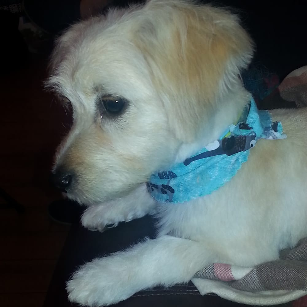Dog Grooming In Alhambra Ca